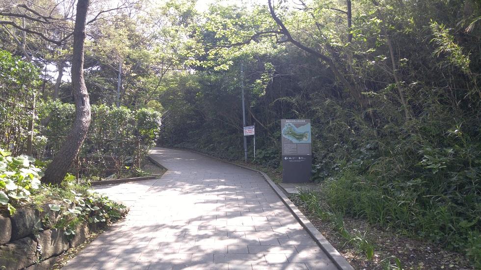 散策コースは足元がしっかりと整備されていて歩きやすいです