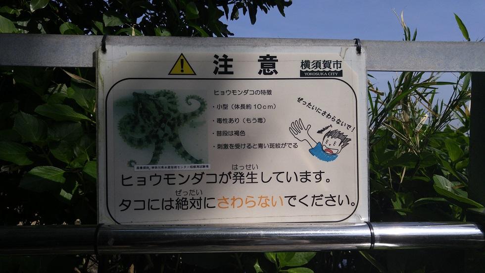 ヒョウモンダコ注意の看板
