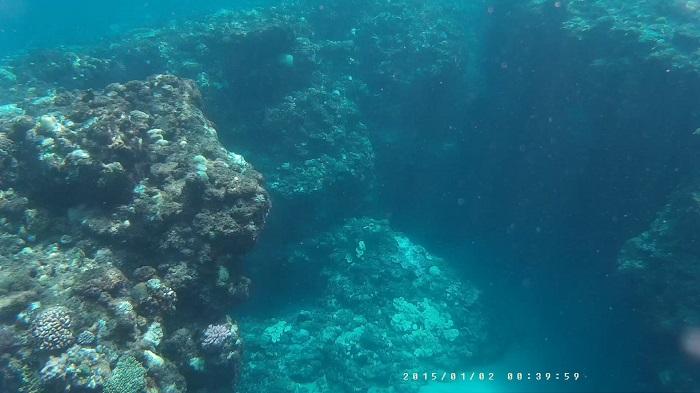 サンゴの先端その1