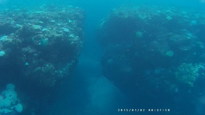 サンゴの先端その3