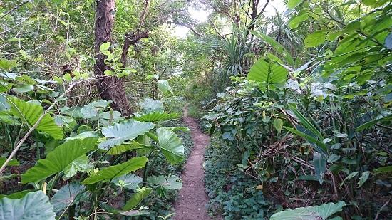 ジャングルのような道