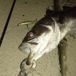 """<span class=""""title"""">綾瀬川でシーバスは釣れるのか?葛飾区の木根川橋付近で狙ってみた!</span>"""