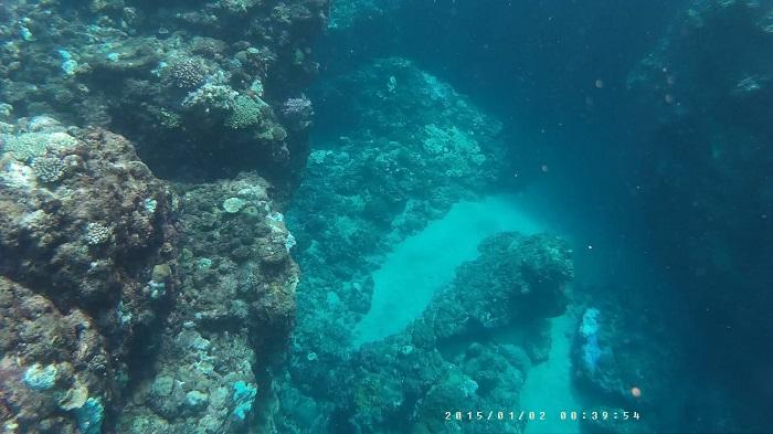 サンゴの先端その2